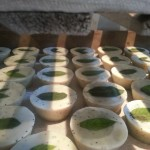 Minty Fresh Scrub Cakes_on drying racks_ALL NATURAL SOAP Co